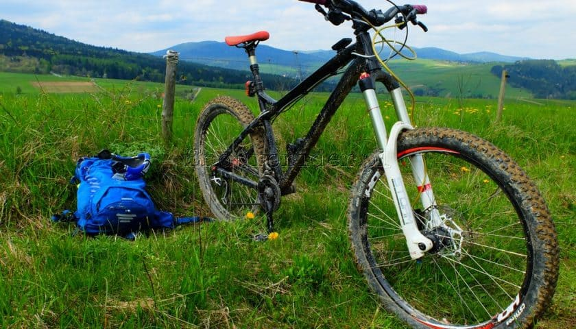 Dartmoor Primal